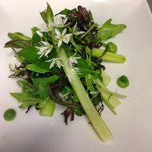 local asparagus wild garlic and pea puree