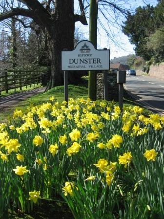 dunster-daffodills-low-res