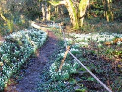 snowdrop-valley-low-res