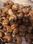 pile of snails